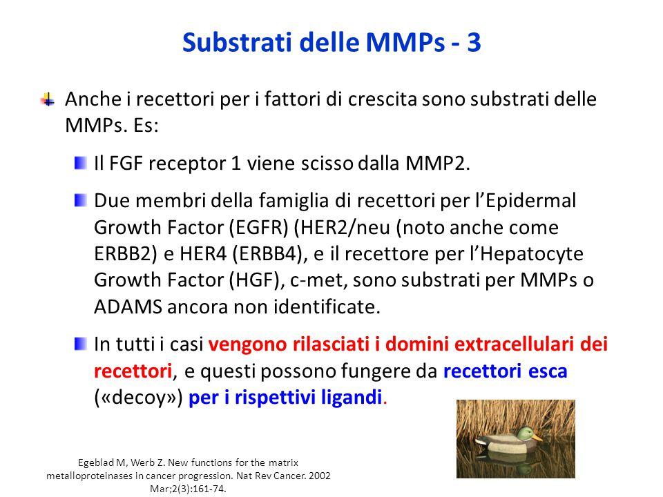 Substrati delle MMPs - 3 Anche i recettori per i fattori di crescita sono substrati delle MMPs. Es: