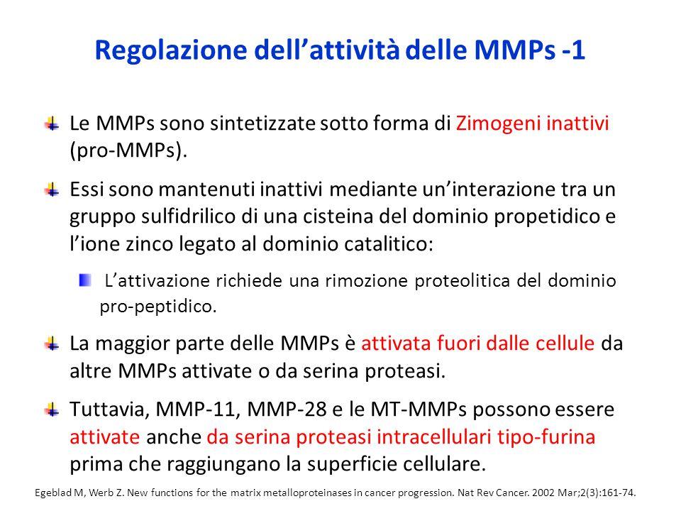 Regolazione dell'attività delle MMPs -1