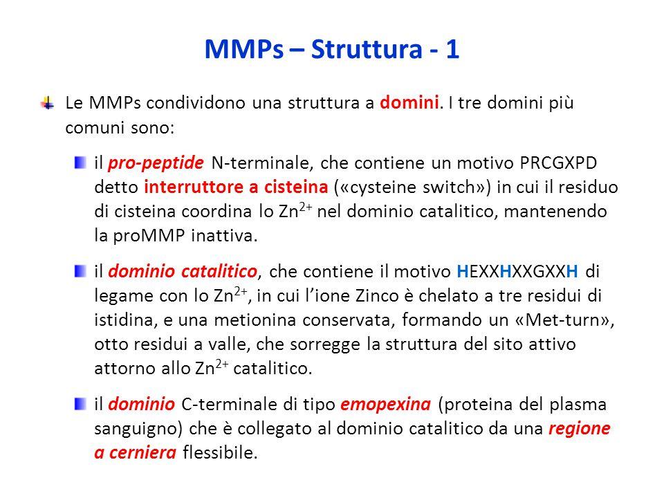 MMPs – Struttura - 1 Le MMPs condividono una struttura a domini. I tre domini più comuni sono: