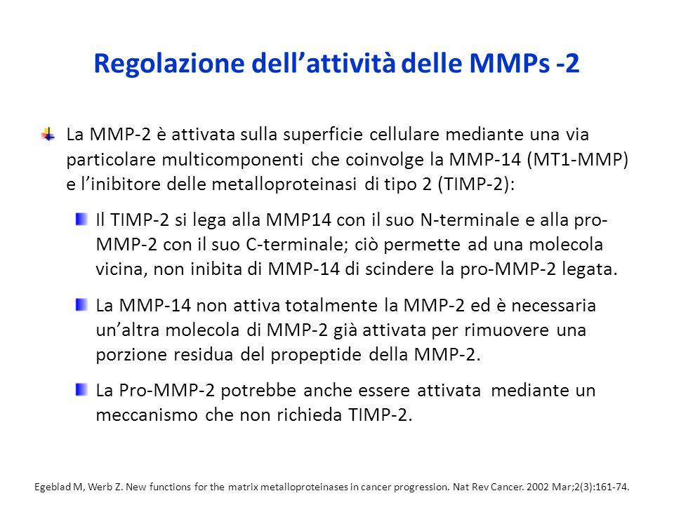 Regolazione dell'attività delle MMPs -2