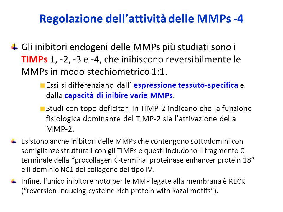 Regolazione dell'attività delle MMPs -4