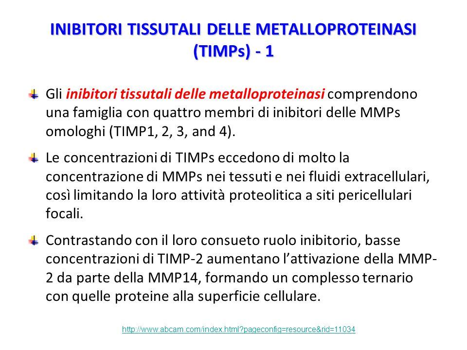 INIBITORI TISSUTALI DELLE METALLOPROTEINASI (TIMPs) - 1