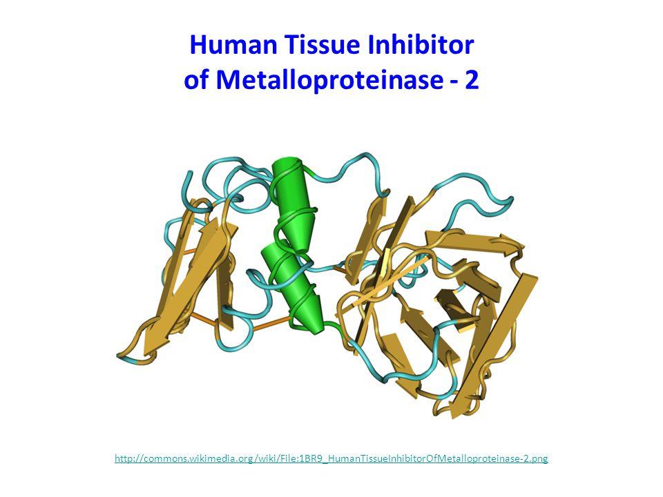 Human Tissue Inhibitor of Metalloproteinase - 2