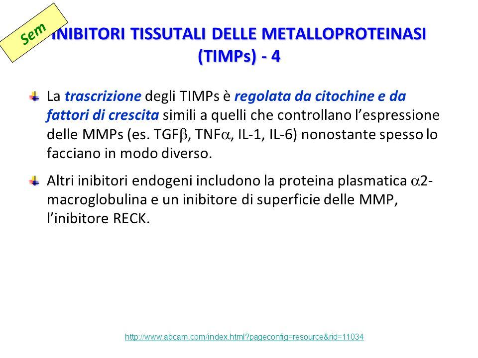 INIBITORI TISSUTALI DELLE METALLOPROTEINASI (TIMPs) - 4