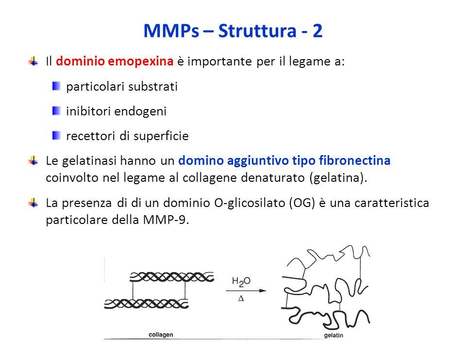 MMPs – Struttura - 2 Il dominio emopexina è importante per il legame a: particolari substrati. inibitori endogeni.