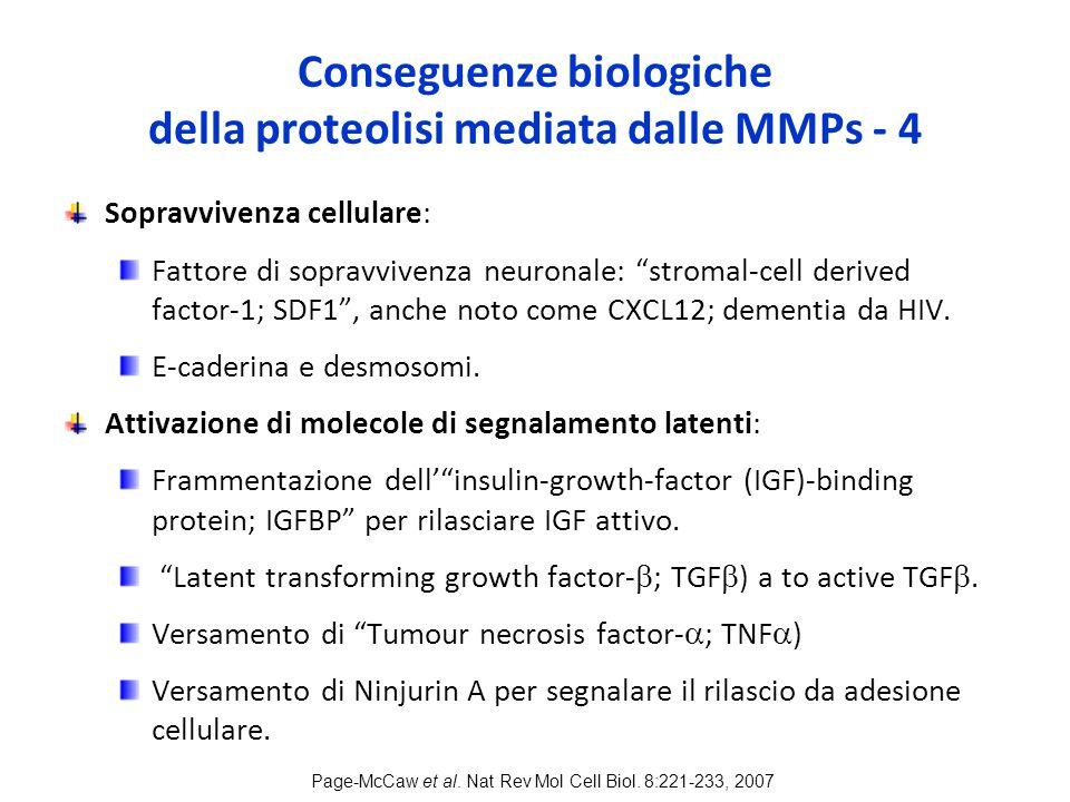 Conseguenze biologiche della proteolisi mediata dalle MMPs - 4