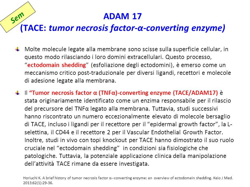ADAM 17 (TACE: tumor necrosis factor-α-converting enzyme)