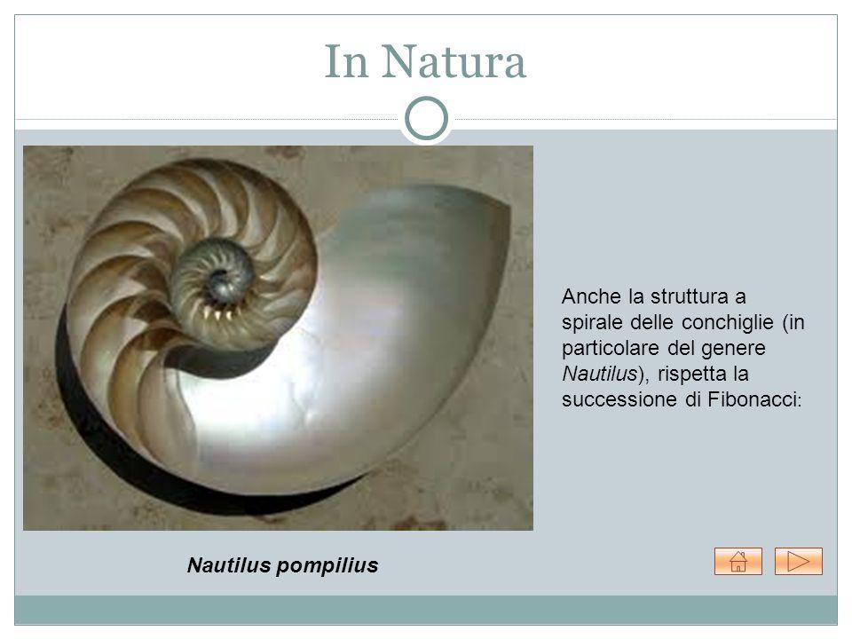 In Natura Anche la struttura a spirale delle conchiglie (in particolare del genere Nautilus), rispetta la successione di Fibonacci: