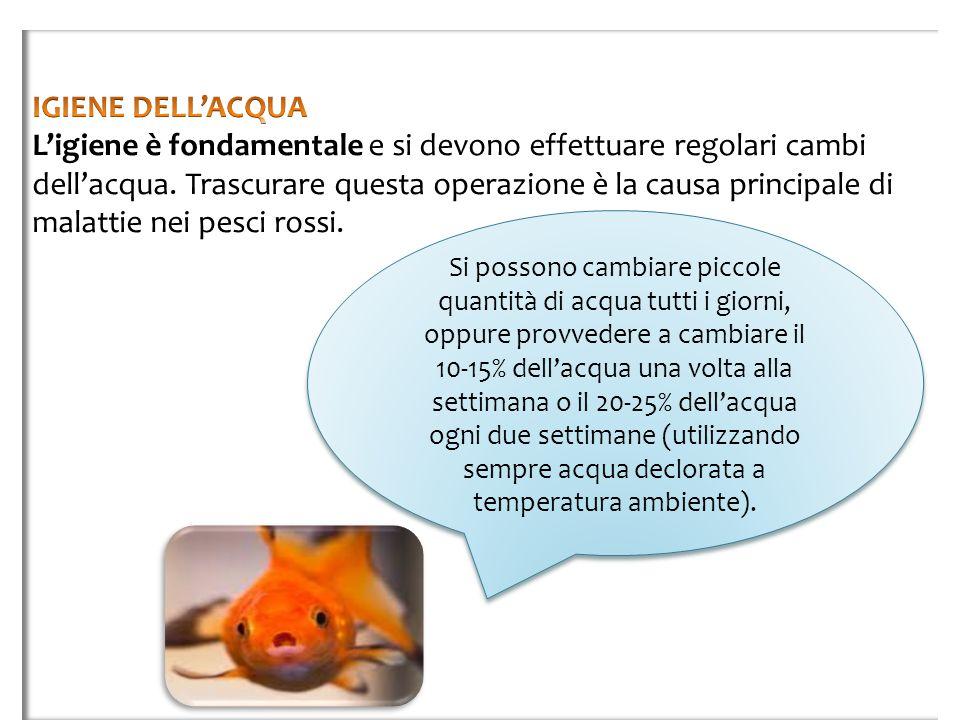 IGIENE DELL'ACQUA L'igiene è fondamentale e si devono effettuare regolari cambi dell'acqua. Trascurare questa operazione è la causa principale di malattie nei pesci rossi.