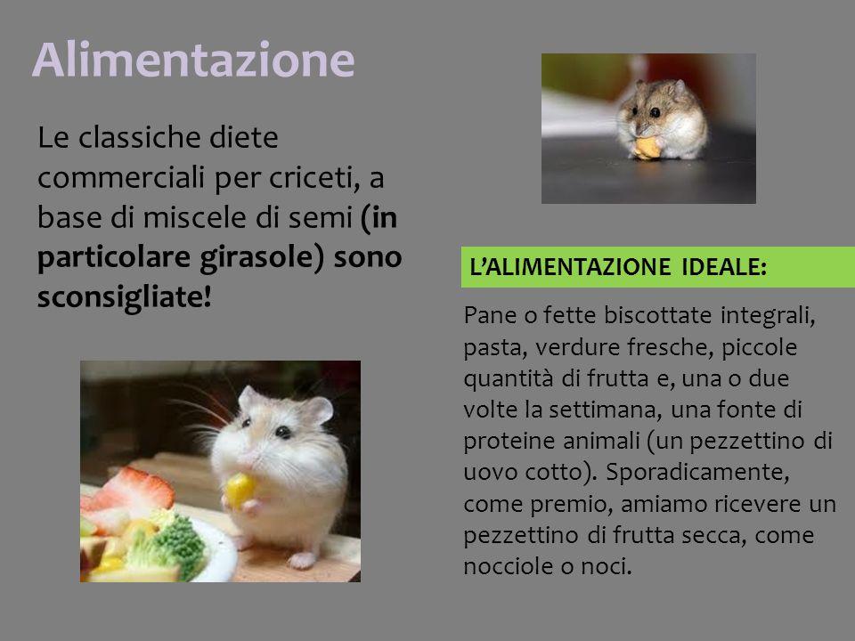 Alimentazione Le classiche diete commerciali per criceti, a base di miscele di semi (in particolare girasole) sono sconsigliate!