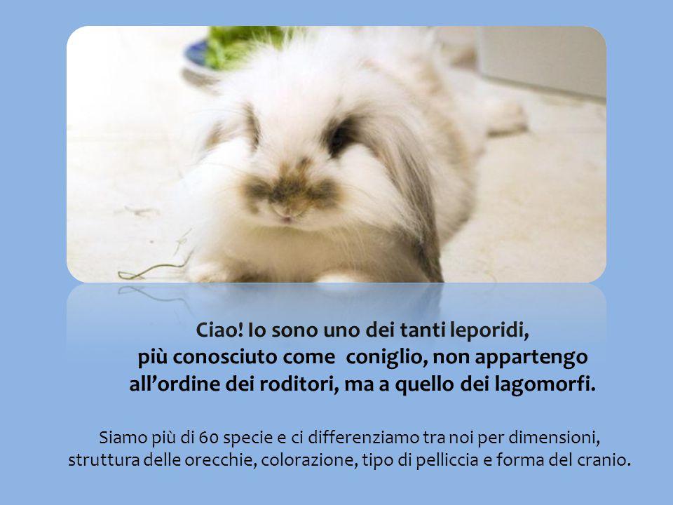 Ciao! Io sono uno dei tanti leporidi, più conosciuto come coniglio, non appartengo all'ordine dei roditori, ma a quello dei lagomorfi.