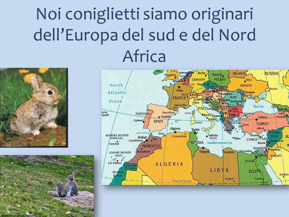 Noi coniglietti siamo originari dell'Europa del sud e del Nord Africa