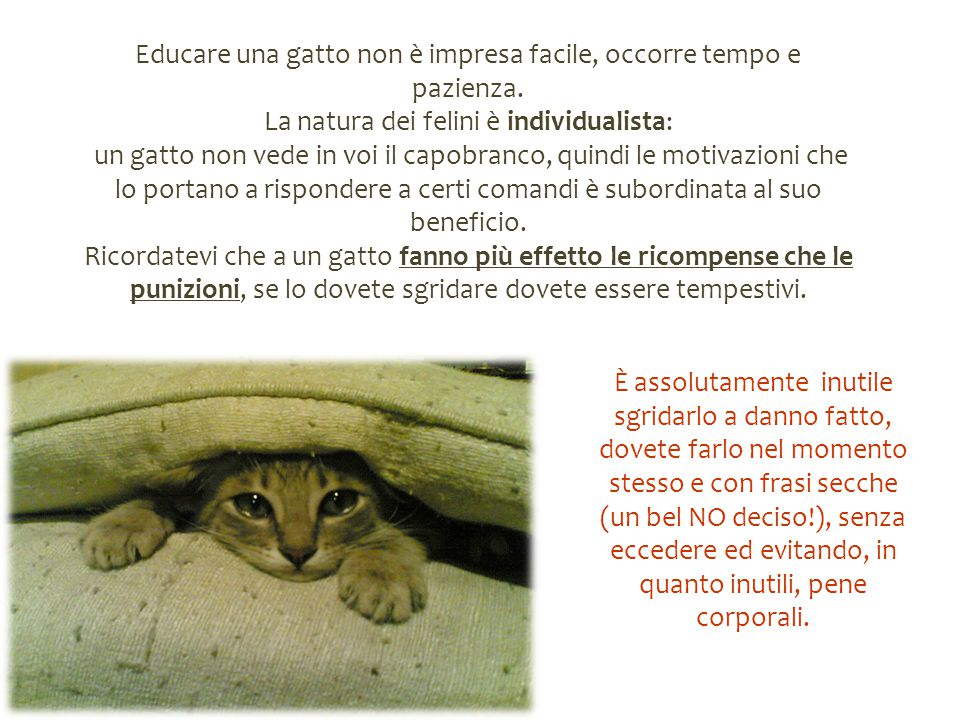 Educare una gatto non è impresa facile, occorre tempo e pazienza.