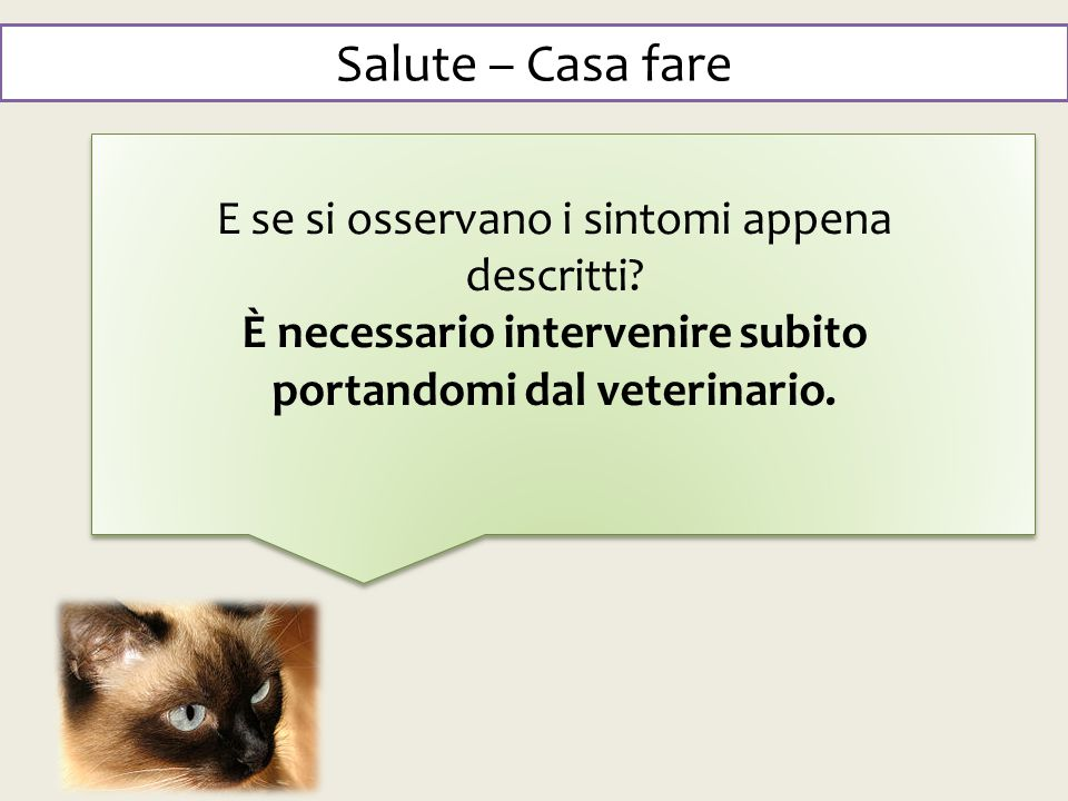 È necessario intervenire subito portandomi dal veterinario.