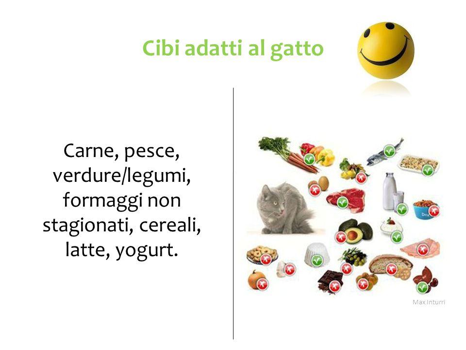 Cibi adatti al gatto Carne, pesce, verdure/legumi, formaggi non stagionati, cereali, latte, yogurt.
