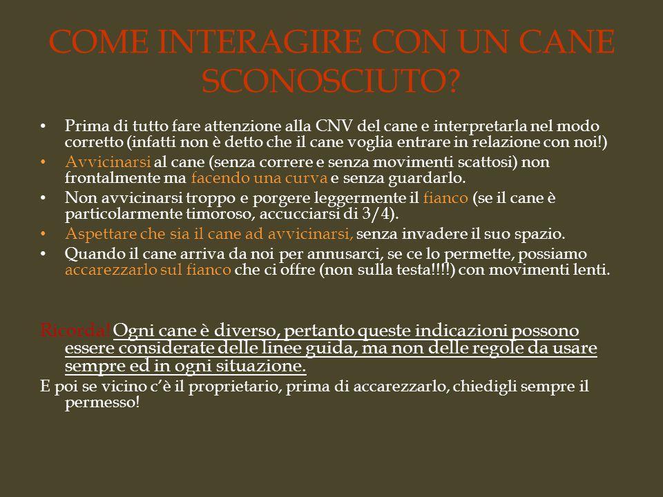 COME INTERAGIRE CON UN CANE SCONOSCIUTO