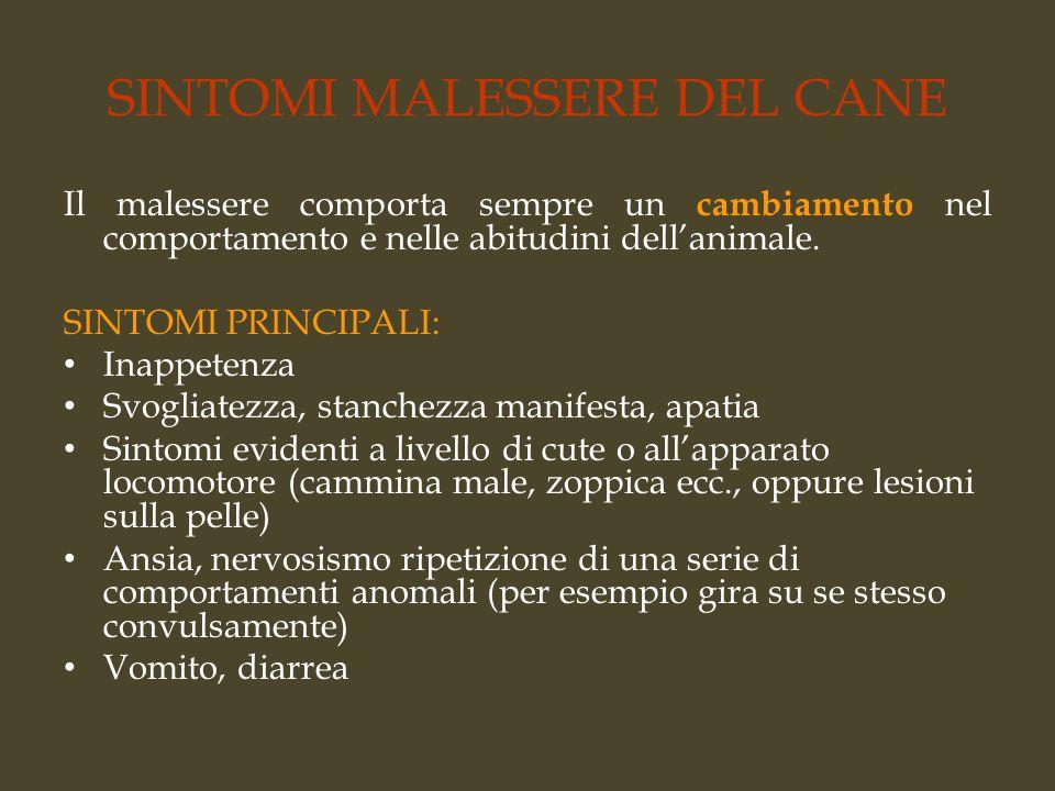 SINTOMI MALESSERE DEL CANE