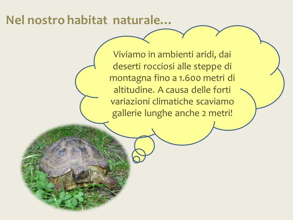 Nel nostro habitat naturale…
