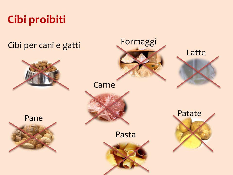 Cibi proibiti Formaggi Cibi per cani e gatti Latte Carne Patate Pane