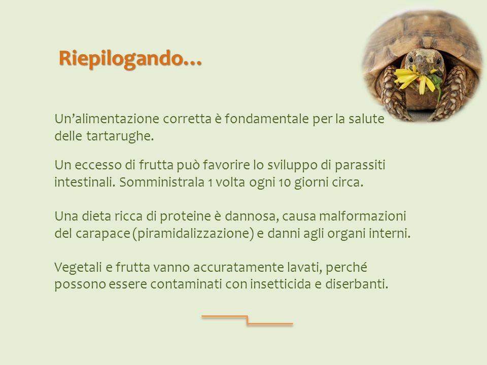 Riepilogando… Un'alimentazione corretta è fondamentale per la salute delle tartarughe.