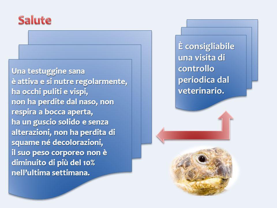 Salute È consigliabile una visita di controllo periodica dal veterinario. Una testuggine sana. è attiva e si nutre regolarmente,