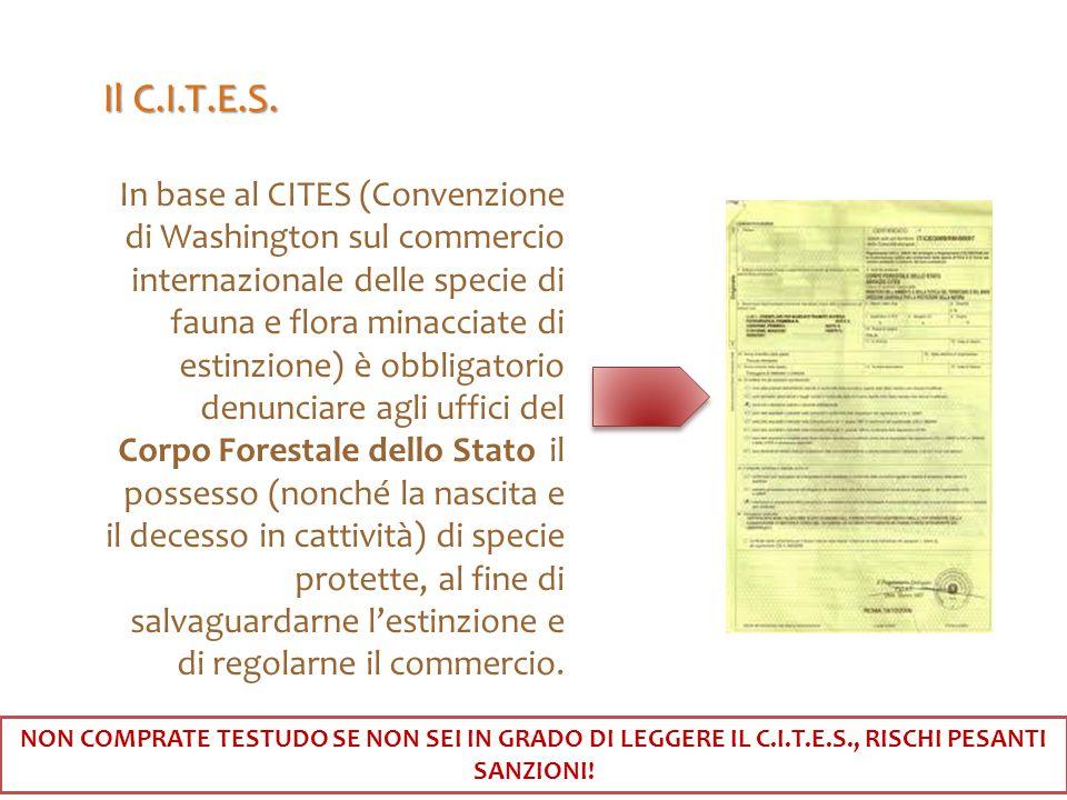 Il C.I.T.E.S.
