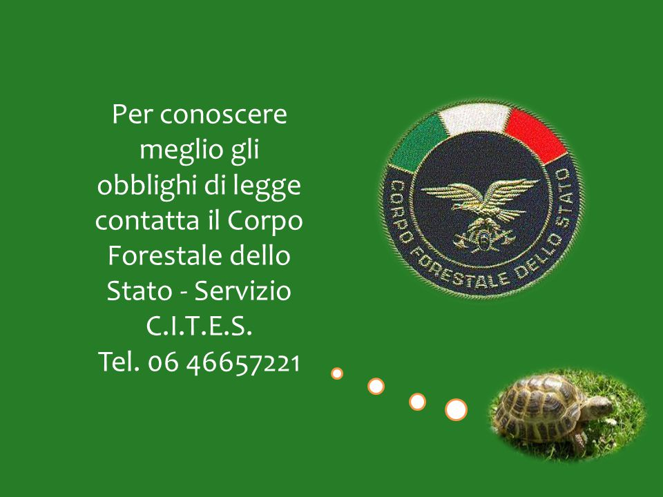 Per conoscere meglio gli obblighi di legge contatta il Corpo Forestale dello Stato - Servizio C.I.T.E.S.