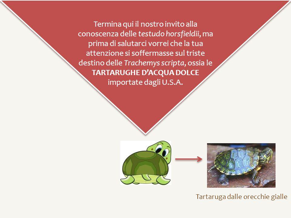 TARTARUGHE D'ACQUA DOLCE importate dagli U.S.A.