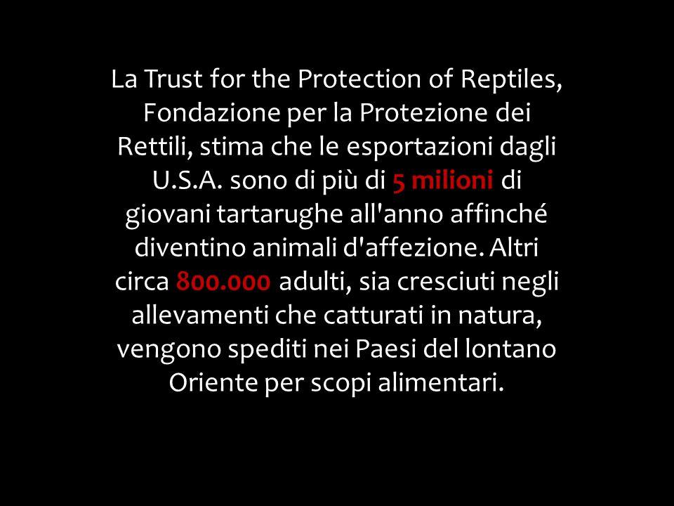 La Trust for the Protection of Reptiles, Fondazione per la Protezione dei Rettili, stima che le esportazioni dagli U.S.A.