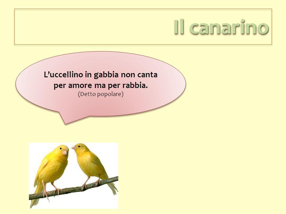 L'uccellino in gabbia non canta per amore ma per rabbia.
