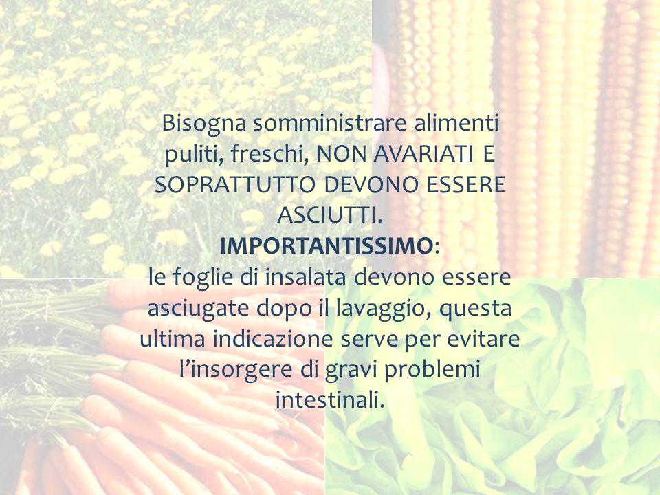 Bisogna somministrare alimenti puliti, freschi, NON AVARIATI E SOPRATTUTTO DEVONO ESSERE ASCIUTTI.