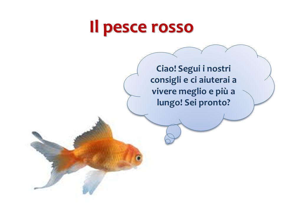 Il pesce rosso Ciao. Segui i nostri consigli e ci aiuterai a vivere meglio e più a lungo.
