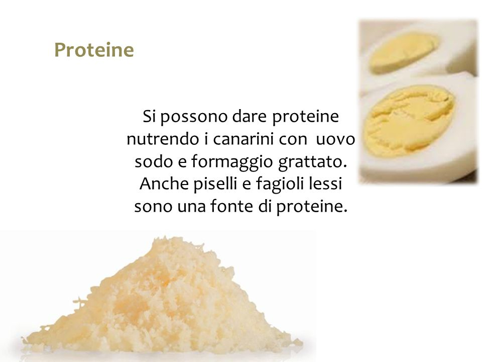 Proteine Si possono dare proteine nutrendo i canarini con uovo sodo e formaggio grattato.