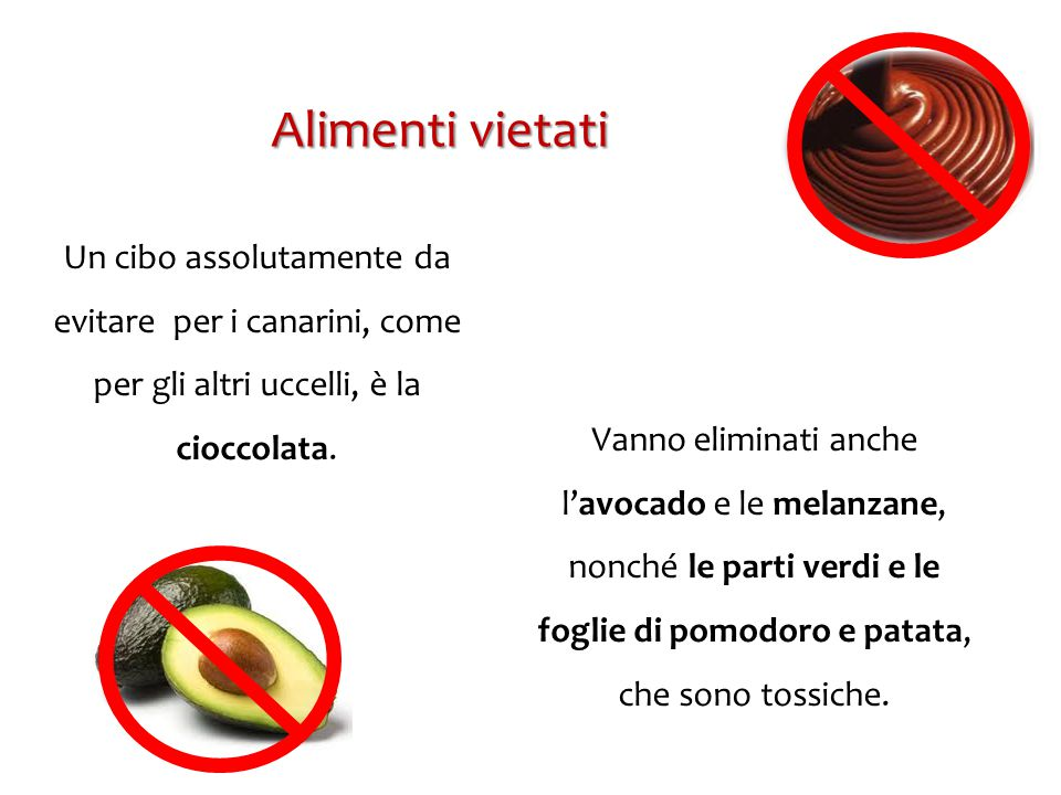 Alimenti vietati Un cibo assolutamente da evitare per i canarini, come per gli altri uccelli, è la cioccolata.