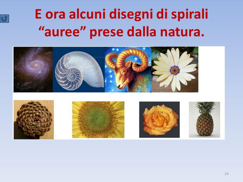E ora alcuni disegni di spirali auree prese dalla natura.