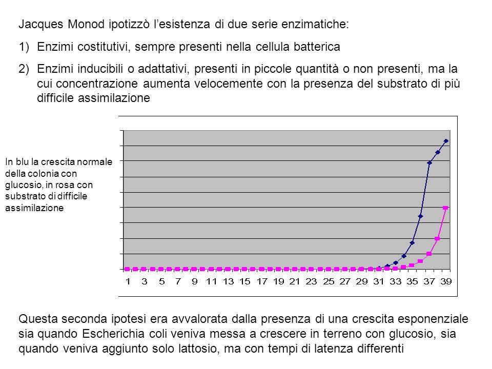 Jacques Monod ipotizzò l'esistenza di due serie enzimatiche: