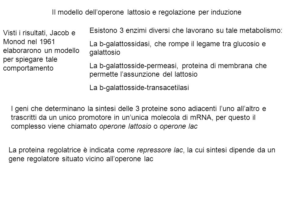 Il modello dell'operone lattosio e regolazione per induzione