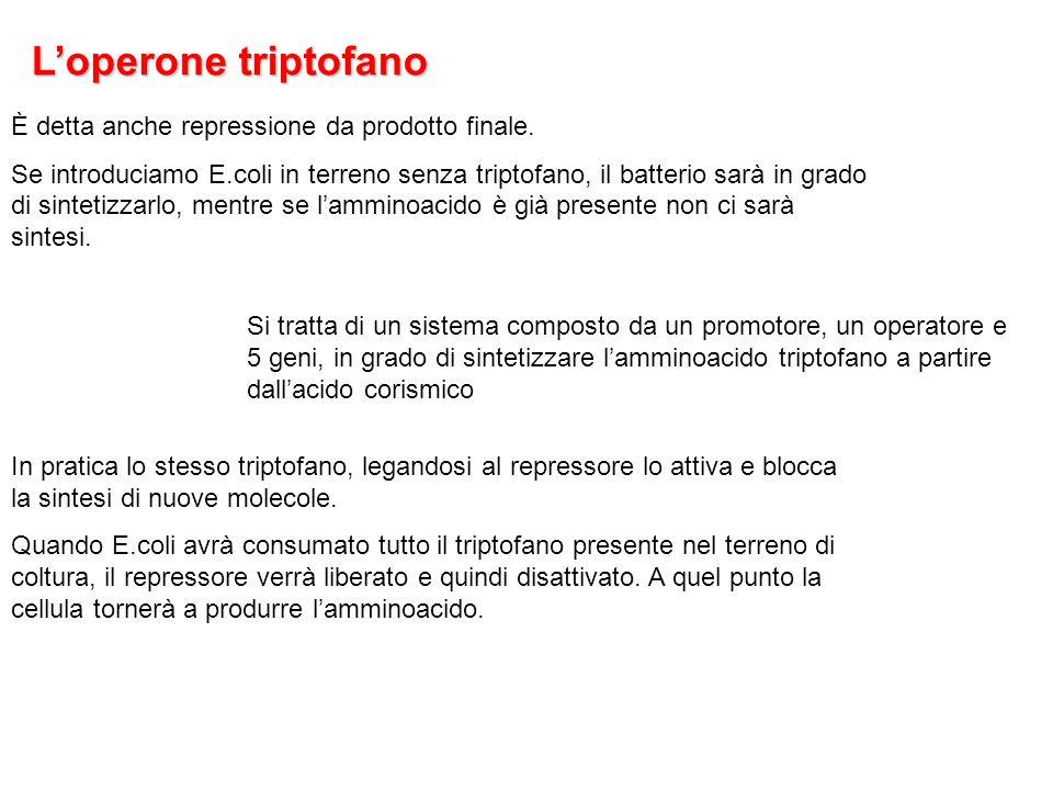 L'operone triptofano È detta anche repressione da prodotto finale.