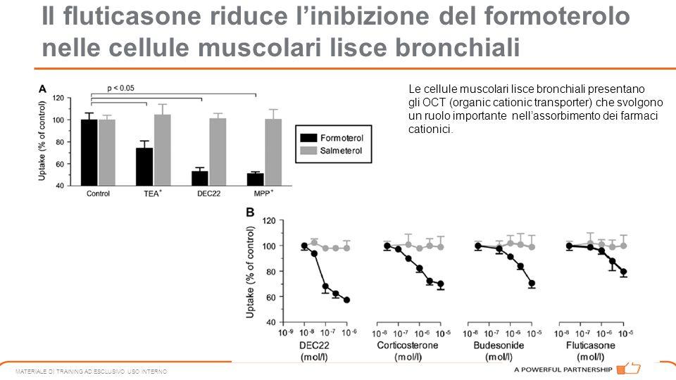 Il fluticasone riduce l'inibizione del formoterolo nelle cellule muscolari lisce bronchiali