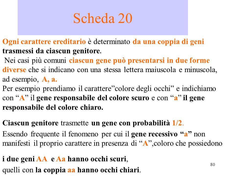 Scheda 20 Ogni carattere ereditario è determinato da una coppia di geni trasmessi da ciascun genitore.