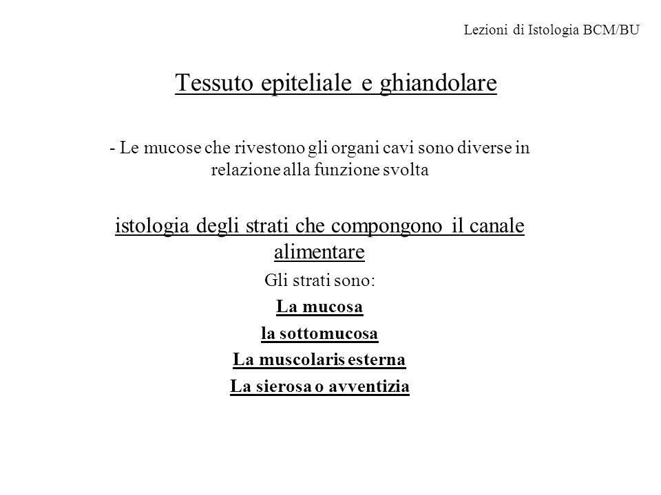 Tessuto epiteliale e ghiandolare