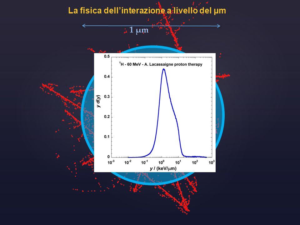 La fisica dell'interazione a livello del µm