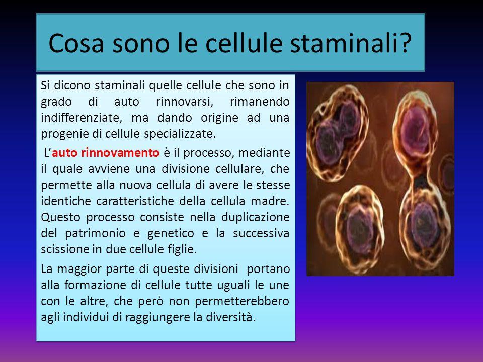 Cosa sono le cellule staminali
