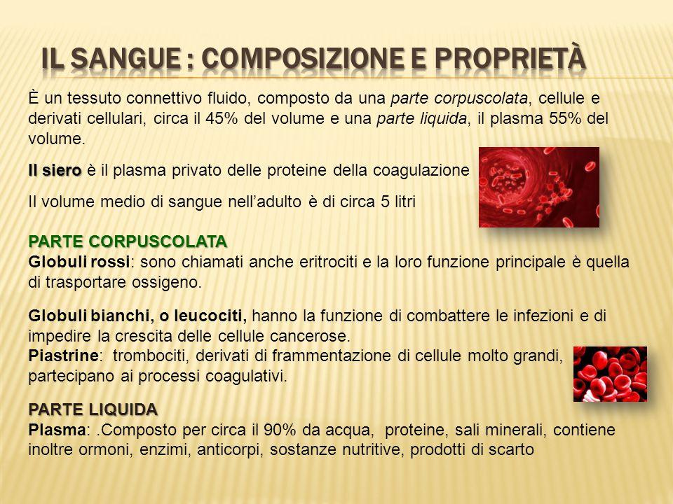 IL SANGUE : composizione e proprietà
