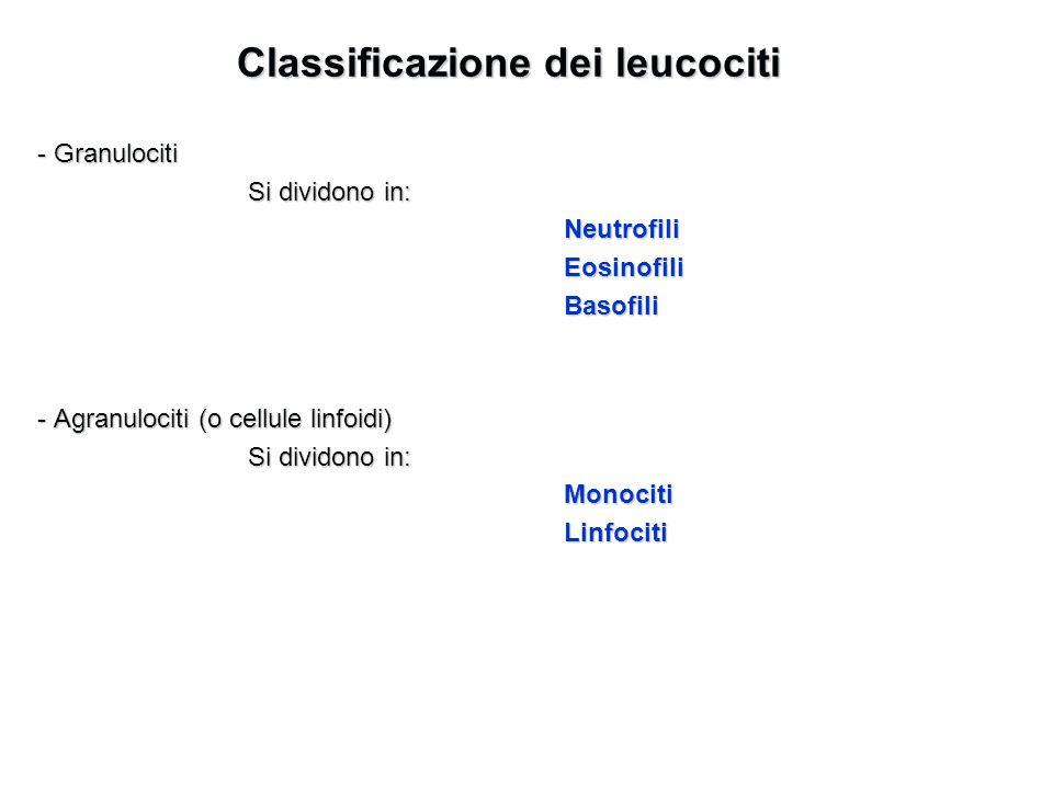 Classificazione dei leucociti