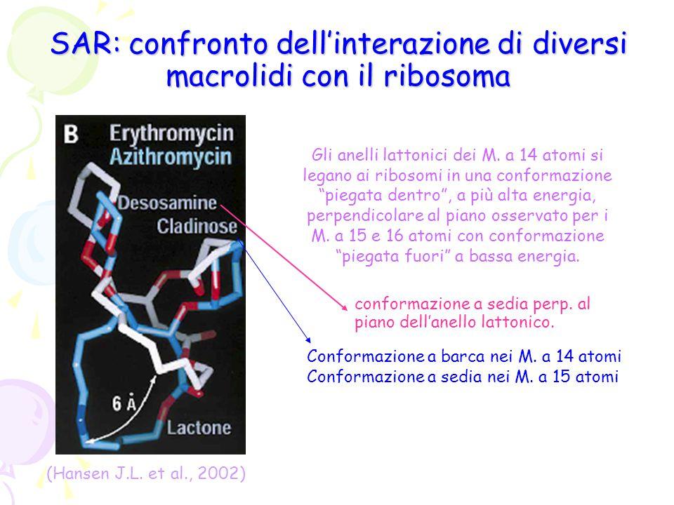 SAR: confronto dell'interazione di diversi macrolidi con il ribosoma