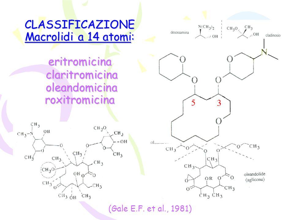 CLASSIFICAZIONE Macrolidi a 14 atomi: eritromicina claritromicina oleandomicina roxitromicina