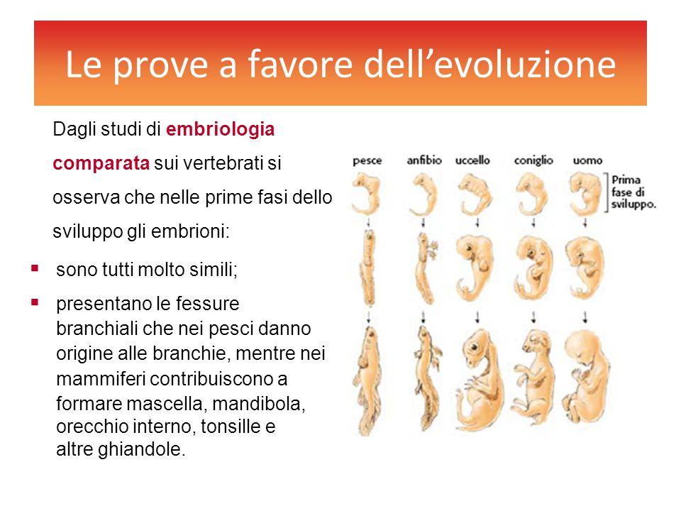 Le prove a favore dell'evoluzione