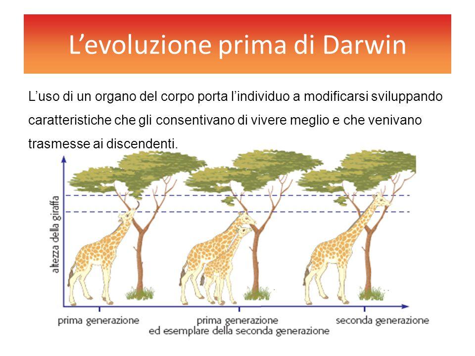 L'evoluzione prima di Darwin
