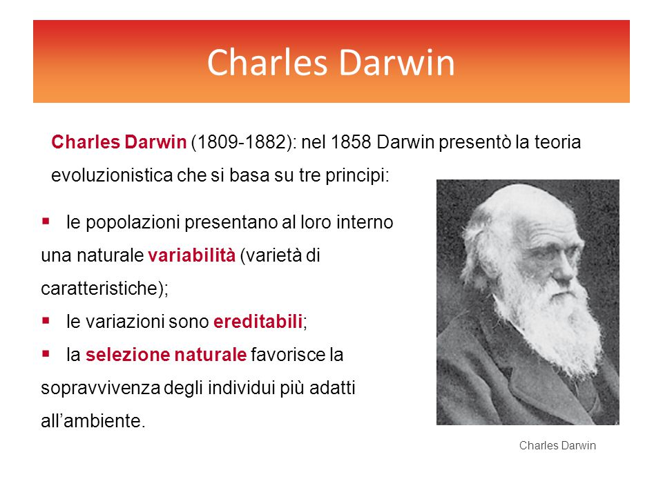 Charles Darwin Charles Darwin (1809-1882): nel 1858 Darwin presentò la teoria evoluzionistica che si basa su tre principi: